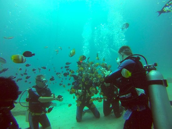 ABWonderdive + Bed & Breakfast: Family dive close to the center