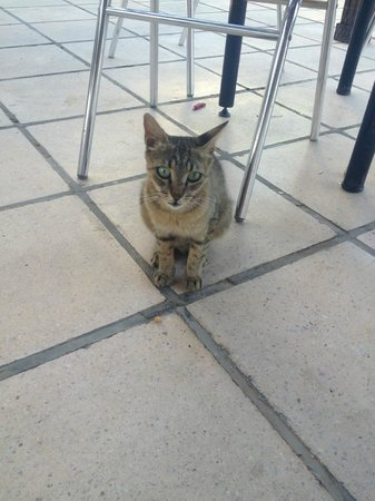 Lato Hotel: One of the very lovely resident cats