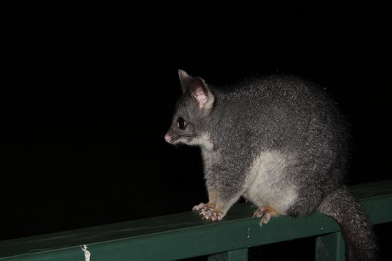 Yallingup Forest Resort: Fat possum
