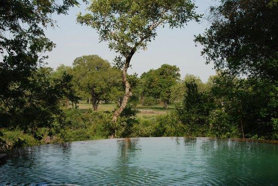 Elephant Plains Game Lodge: Der kleine Pool beim Restaurant-Bereich