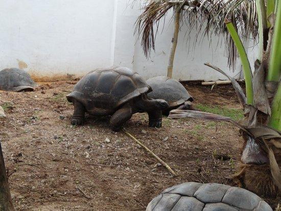 Jamelah Beach Guest House: tortue
