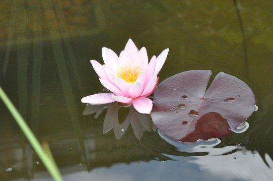 Entre Cour et Jardin: Le bassin fleuri