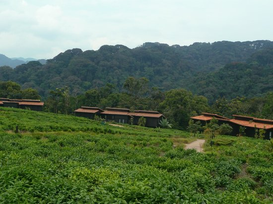 Nyungwe Forest Lodge: Housings