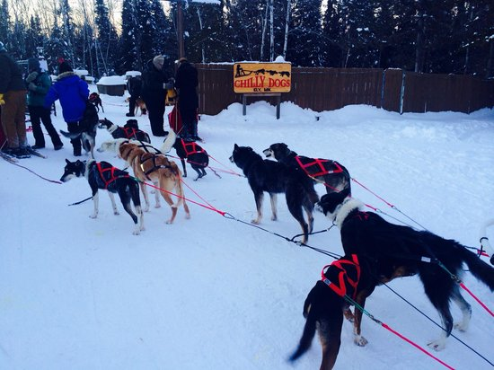 Chilly Dogs Sled Dog Trips: Ready for that hit chocolate - thanks puppies!!