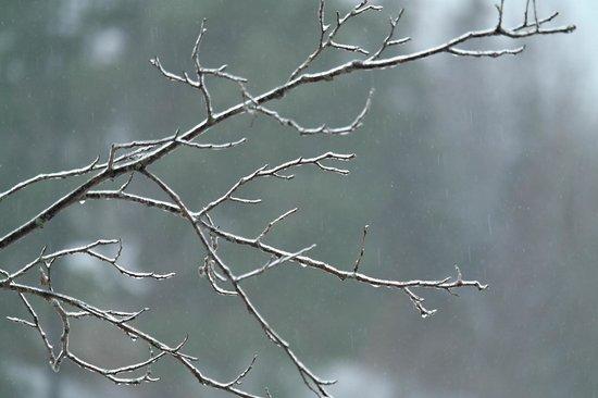 Centennial Park: branche glacée