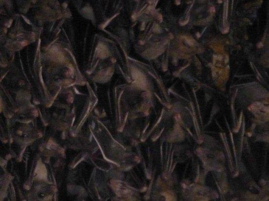 Pura Goa Lawah: murcielagos