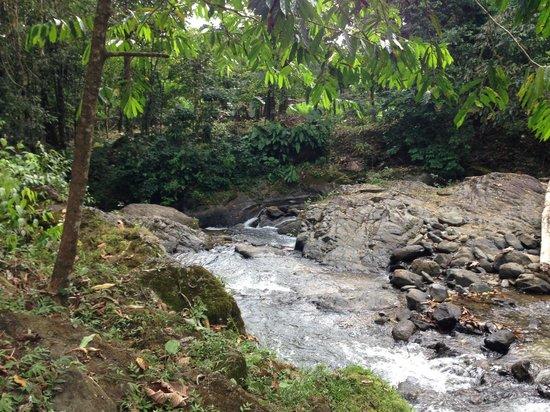 Rio Tico Safari Lodge: River in front of tents