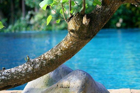 Narima Bungalow Resort: Pool