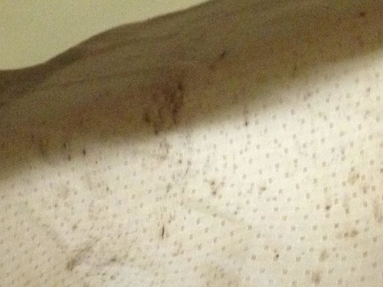 Cocoa Country Inn at Hershey: Mold on the shower curtain