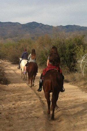 Houston's Horseback Riding: In Sonoran Desert