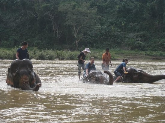 All Lao Elephant Camp - Day Tours: more splash...