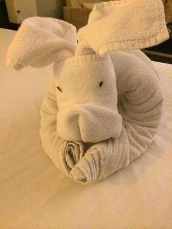 The Zuri White Sands Goa Resort & Casino: A lovely dog made by the housekeeping team