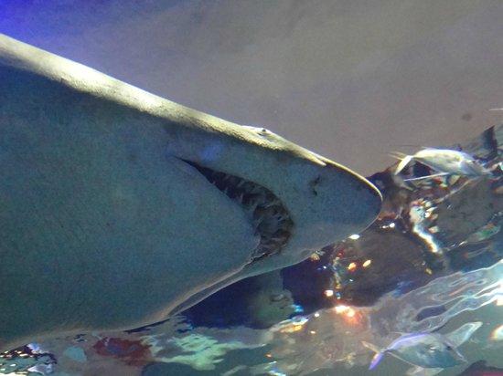 Stingray Picture Of Ripley 39 S Aquarium Of Canada Toronto