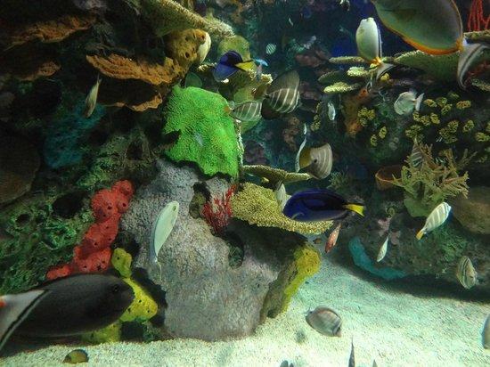 Jellyfish Picture Of Ripley 39 S Aquarium Of Canada
