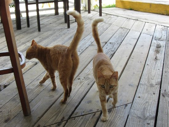 Chenay Bay Beach Resort: Area cats - very friendly!