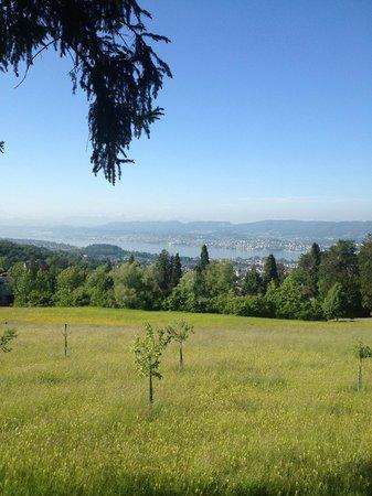 Sorell Hotel Zürichberg: Вид на озеро с террасы