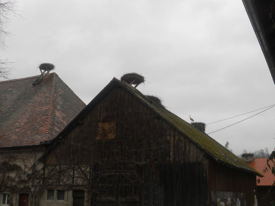 Affenberg Salem: Crane's nest