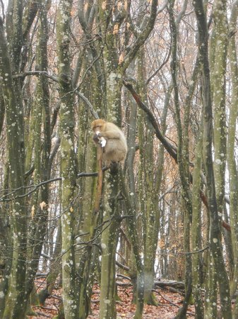 Affenberg Salem: monkey in a tree