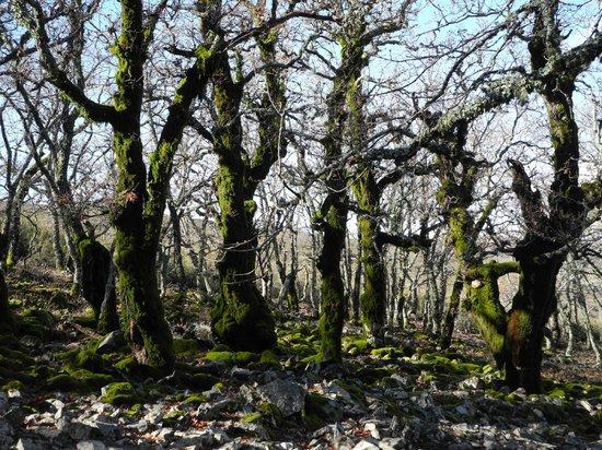 Casa Rural Huerta de Valdolazaro: Bosque de robles