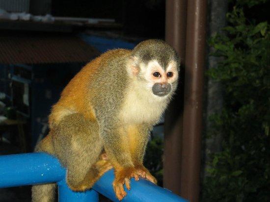 Hotel San Bada: Monkeys everywhere!
