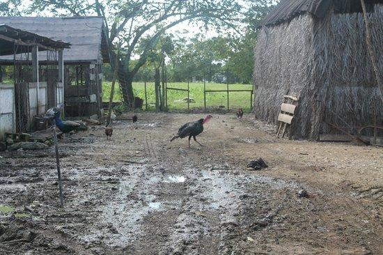 Memories Paraiso Beach Resort: Visite d'une ferme de la Famille.