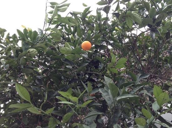 Guzel Hotel: Tangerine...