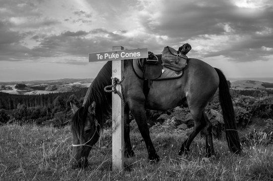 Horse Trek'n: Horse at Te Puke Cones