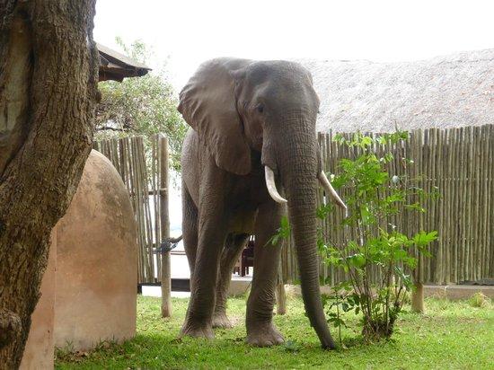 Royal Zambezi Lodge: View