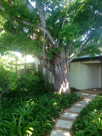 Camp Figtree: Zugang Family Suite