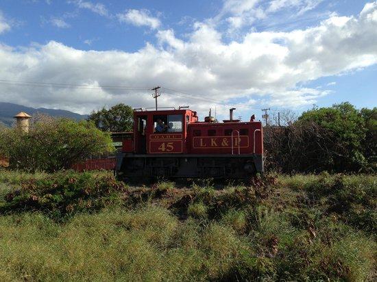Sugar Cane Train : Train engine!
