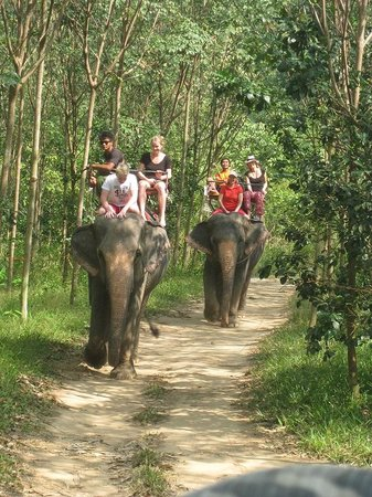 Ban Chang Thai - Elephant Camp: walking in the jungles