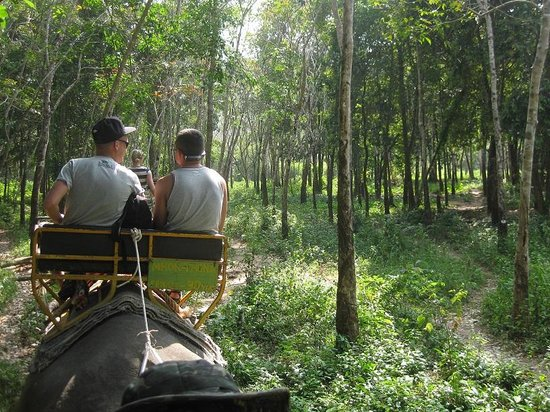 Ban Chang Thai - Elephant Camp: on the way back