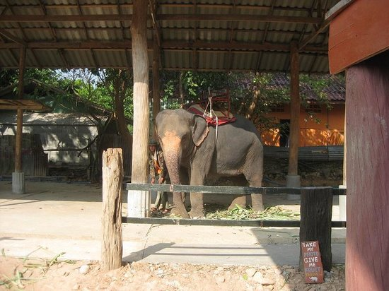 Ban Chang Thai - Elephant Camp: our elephant
