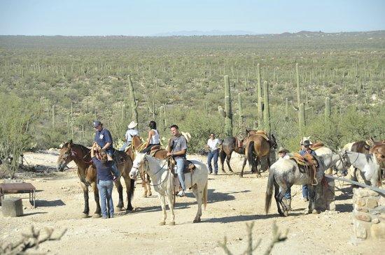 Tanque Verde Ranch: gita a cavallo con pranzo nel deserto