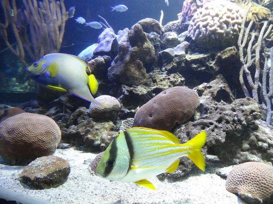 Tortue - Picture of Aquarium de la Guadeloupe, Le Gosier - TripAdvisor