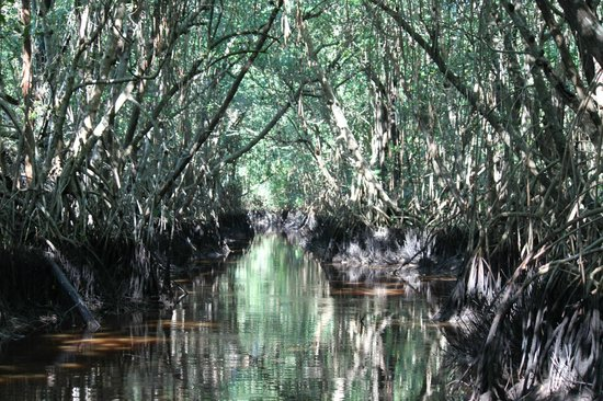 Everglades National Park Boat Tours: The boat us to some of the narrowest sections offering breathtaking views