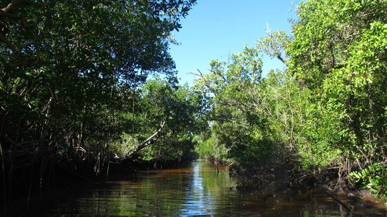 Everglades National Park Boat Tours: Beautiful mangrove forests