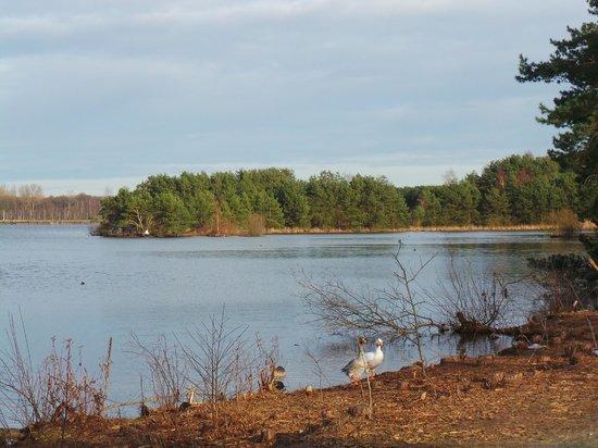 Sunparks Kempense Meren: e lac