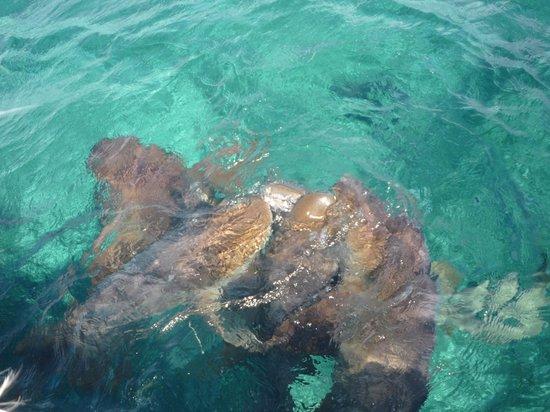 Raggamuffin Tours - Day Tours: Feeding the sharks (shame feeling)