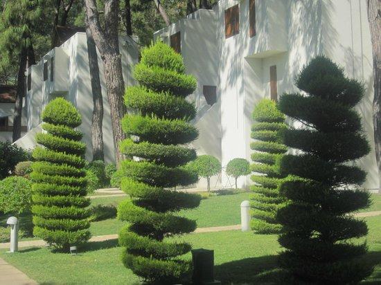 Club Med Palmiye: palmiye
