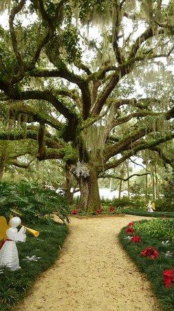 Washington Oaks Gardens State Park: Just after christmas