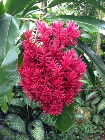 Lyon Arboretum : beautiful science fiction-looking flowers