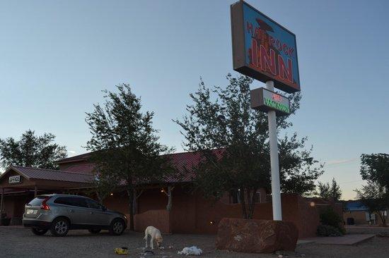 Hat Rock Inn: cane che si ciba direttamente dai sacchetti d'immondizia abbandonati davanti all har rock inn