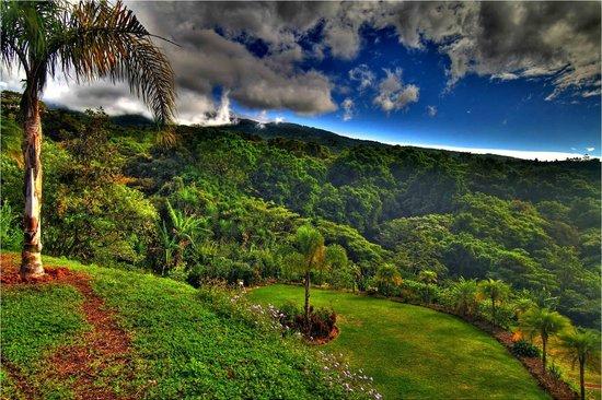 Hotel Mango Valley: Garden