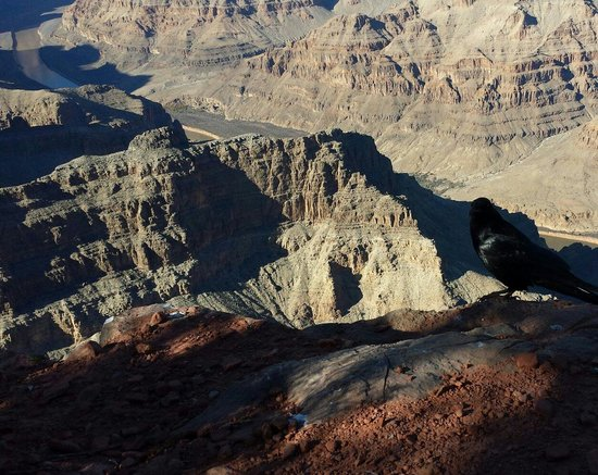 Comedy on Deck Tours: Birds eye view Grand Canyon West