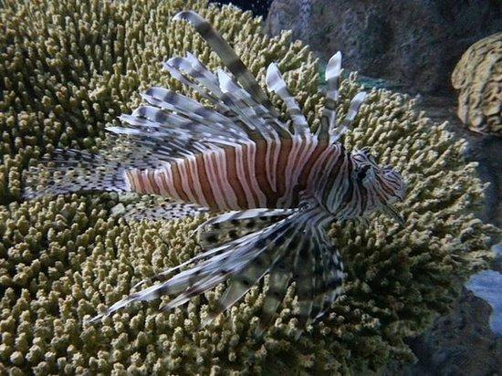 Mote Marine Laboratory and Aquarium: a fish there