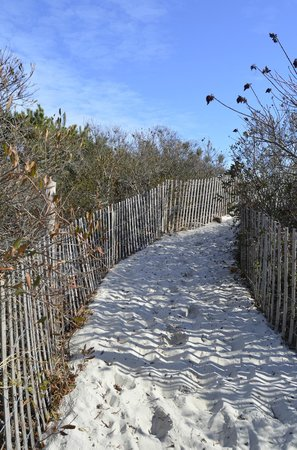 Williams Cottage Inn: Path leading to the beach