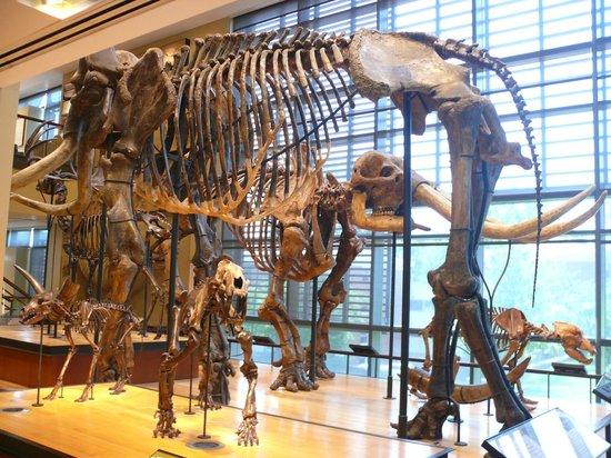 Amherst, MA: Dinosaur bones