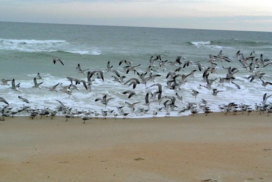 Gamble Rogers Memorial State Recreation Area : birds