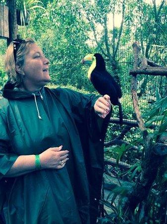 La Paz Waterfall Gardens: me holding a toucan